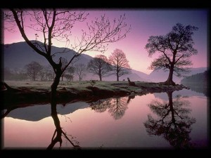 Scenery - Tranquil Water & Trees