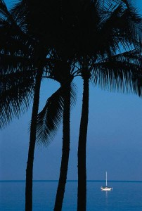 Water Sailboat Palm Trees